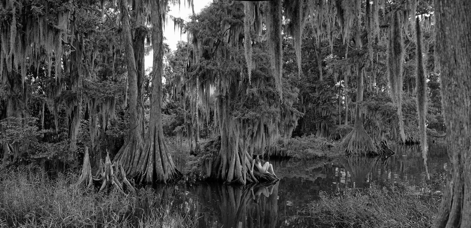 17-new-sepia-carina-wide-cypress