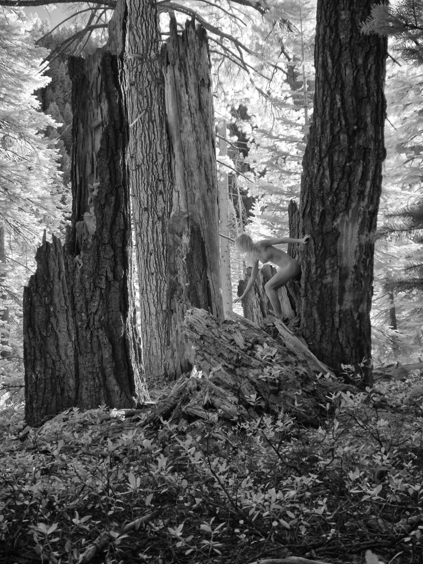 27-Grace-crumbling-redwood-leaning-to-touchsomething