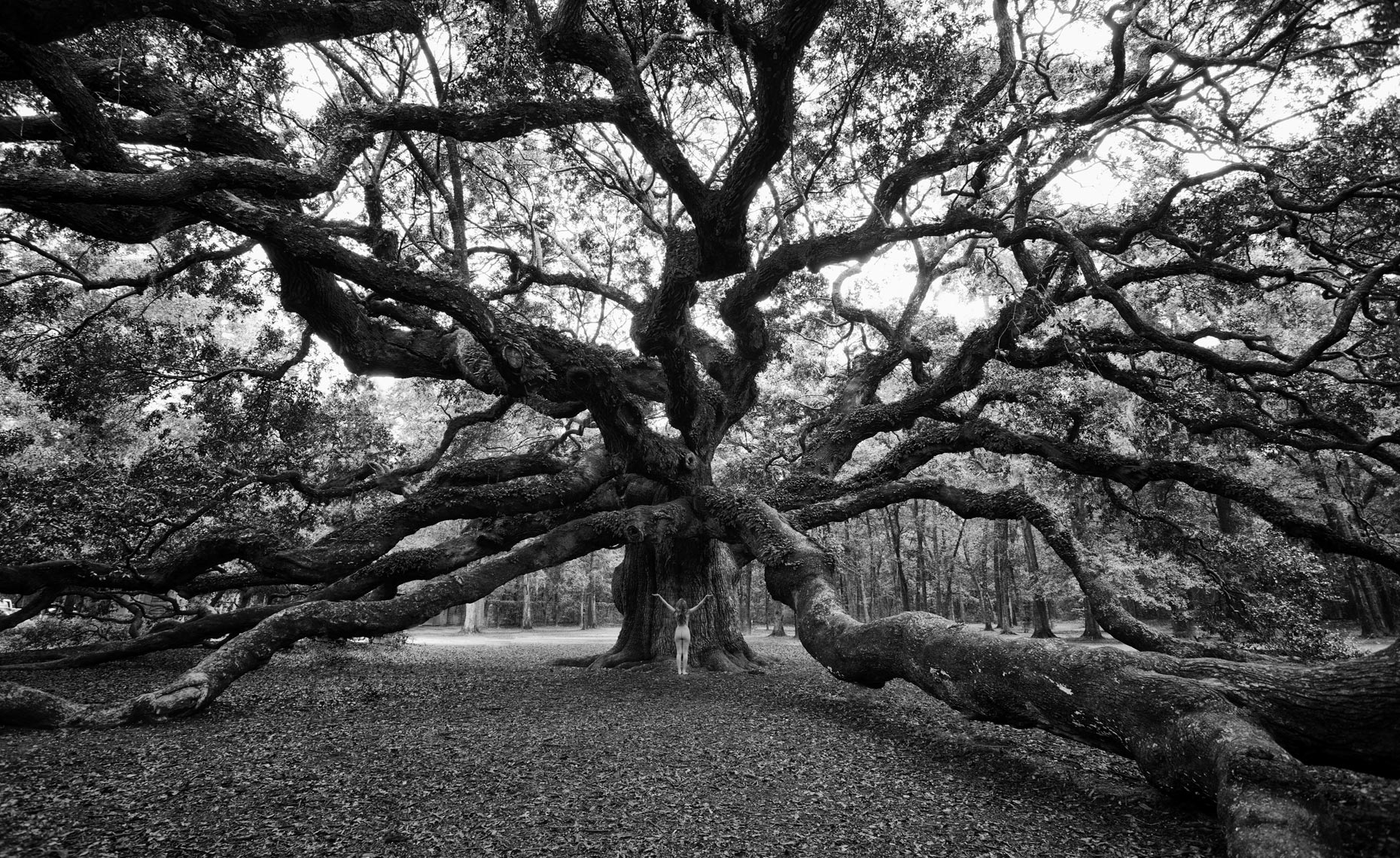 3-katie-angel-oak