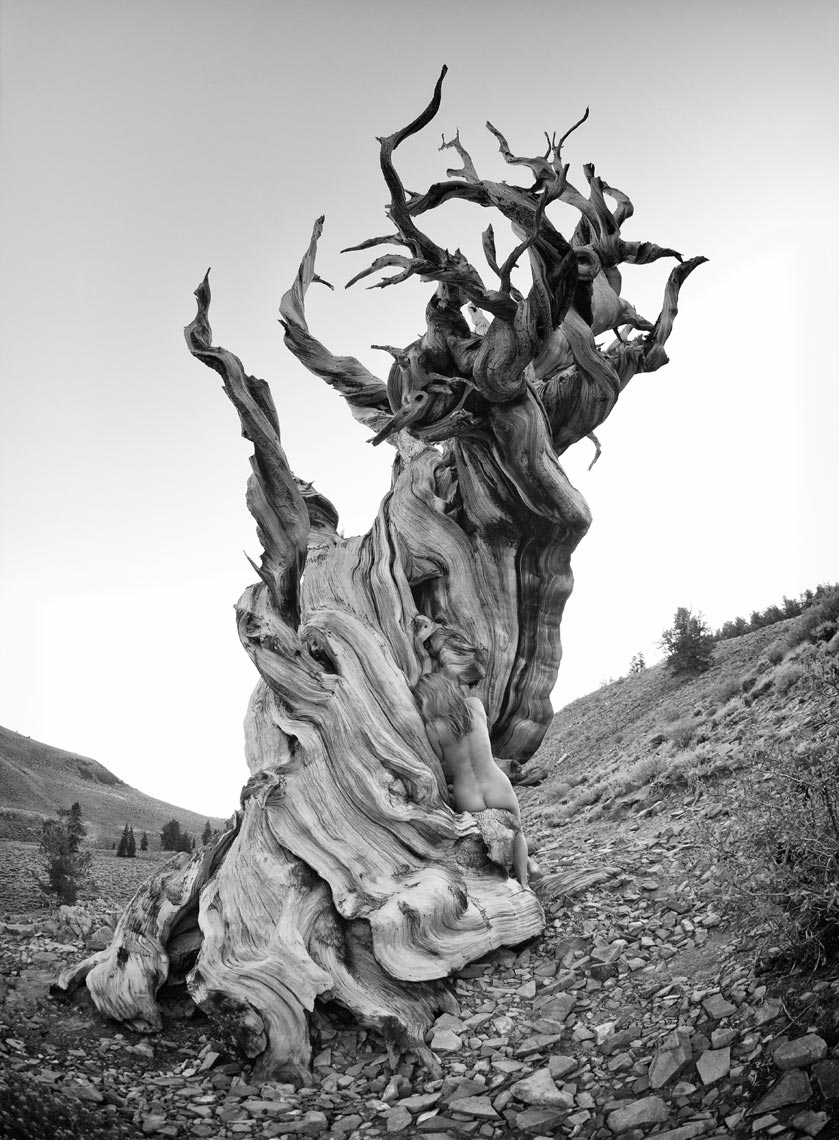 7-kimi-bristlecone-other-view-8-bit-bw-sharp
